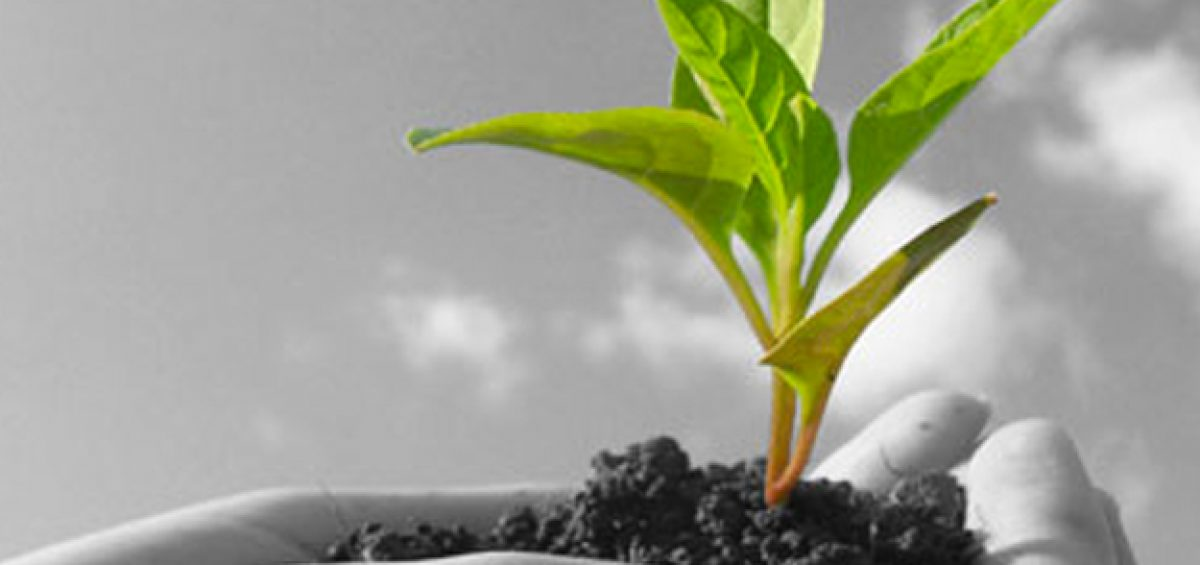 tips for growing your business