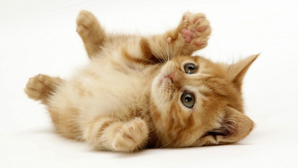 Facebook Business Page Kittens